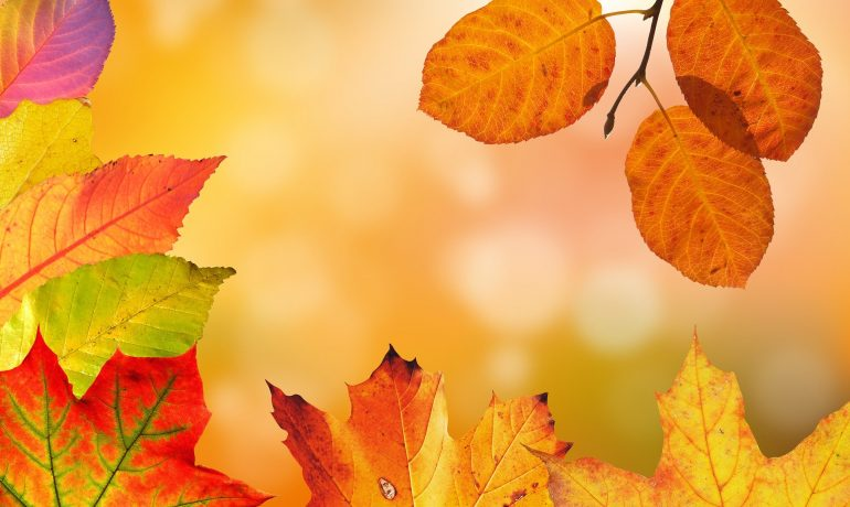 Feng Shui for Autumn – A Guide to Embracing the Cooler Months